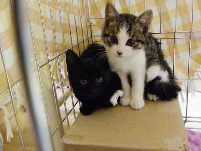 最初のTNRで保護した仔猫兄弟。兄弟揃って貰われて里親さん宅で幸せにしてます。