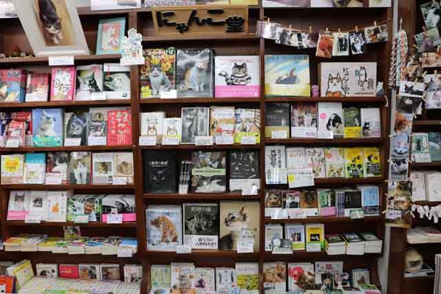 猫の本で埋め尽くされた棚は壮観! 手に取って選びやすい