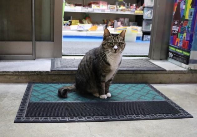レジそばの入口でお客さんをお出迎え