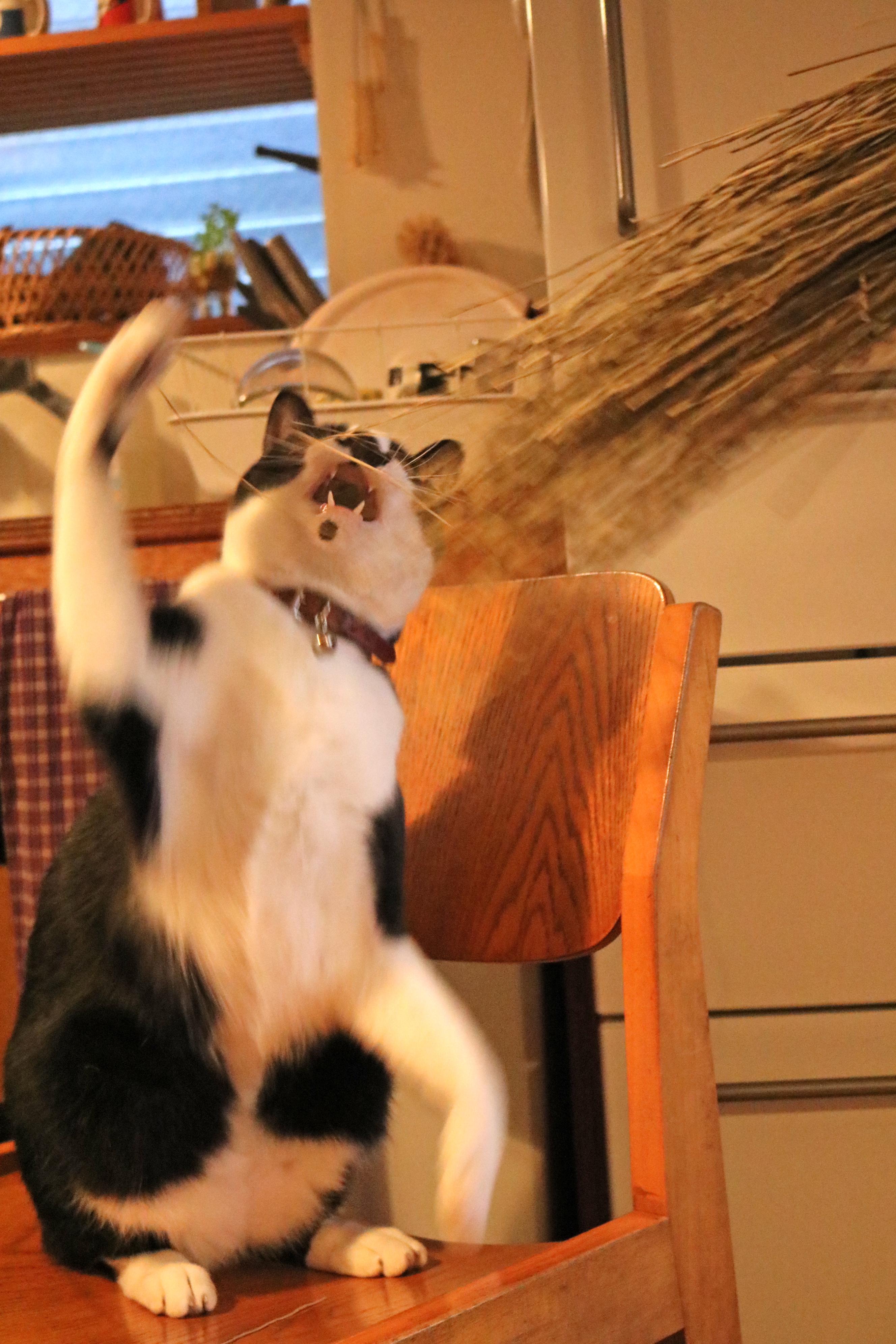 ここぞとばかりに激しい猫パンチ!